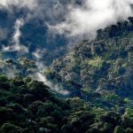 森林を守るコーヒーって?<br />コーヒー生産者が語る持続可能な暮らし方