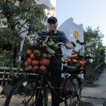 渋柿の収穫&干し柿づくり