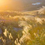 秋の二十四節気とは 江戸っ子に学ぶ風流2