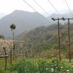 有機農業という暮らし