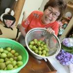 梅の収穫&梅ジュースをつくりました!