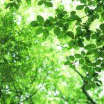 新緑の季節に、生かされて、生きる今を味わう