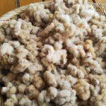 綿と暮らしの、ふかーい繋がり