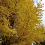 樹齢400年の木の下で