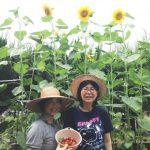 ヒマワリが咲きました~還る家ともにのお庭~