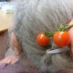 トマトのかんざし